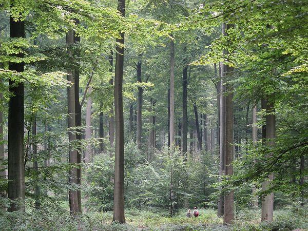 Foresta - foto di CC BY-SA