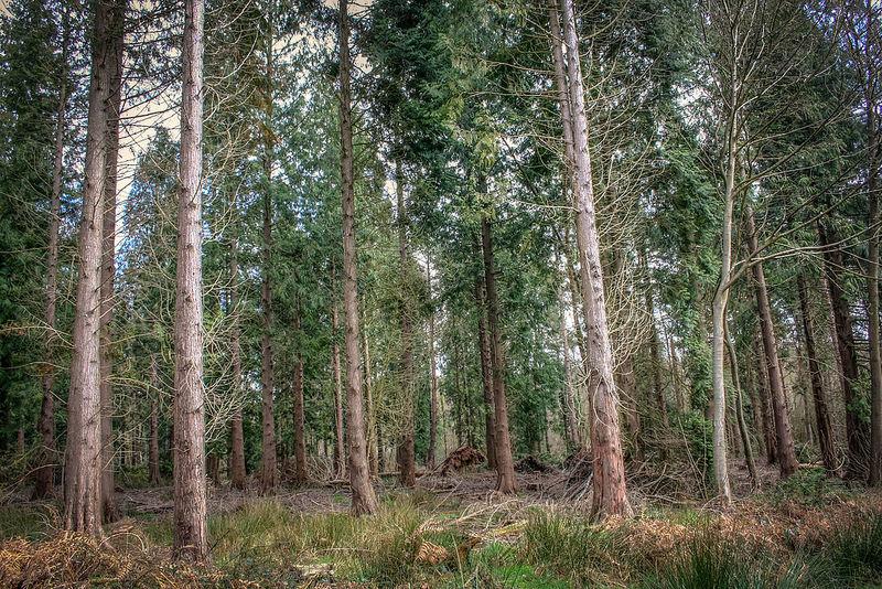 Bosco alberi