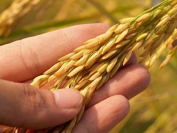 Biodiversità agraria e alimentare