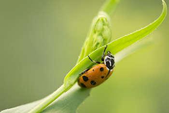 Ricerca biodiversità