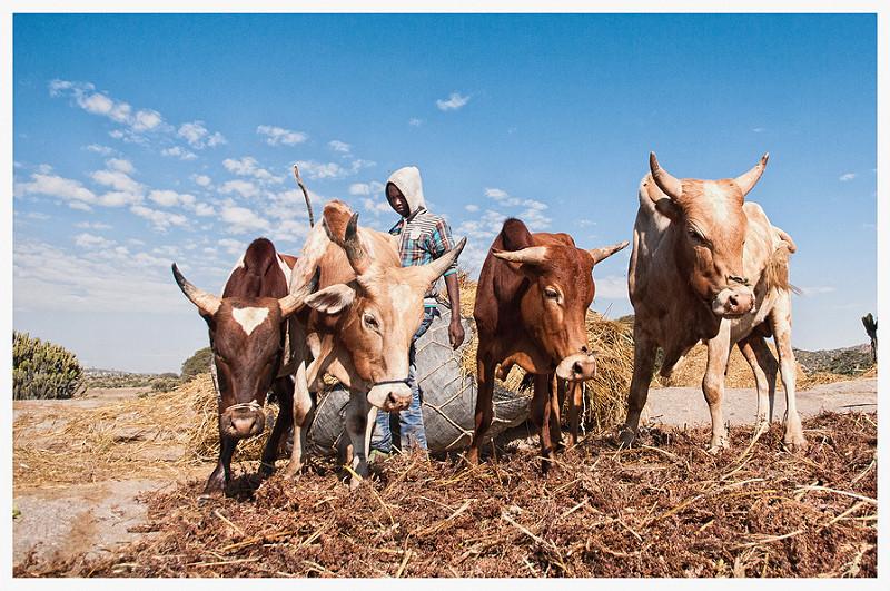 Africa - Photo credit: A n d r e a M o r o n i via Foter.com / CC BY-NC-ND