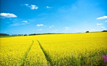 Mercato assicurativo agricolo