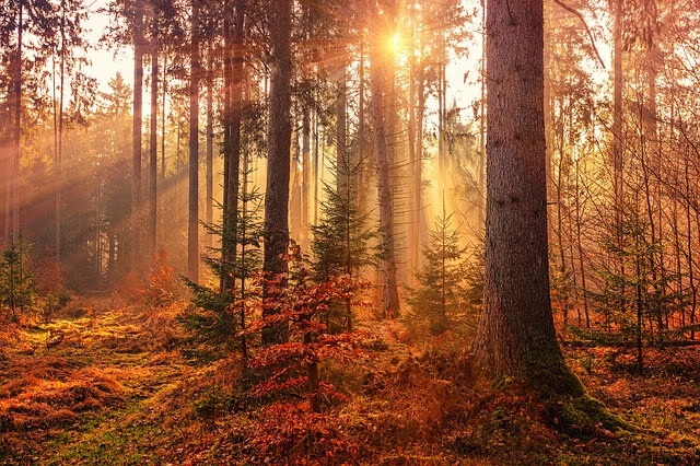 Target 2030 agricoltura e foreste