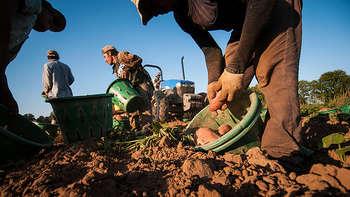 Lavoratori stranieri - photo credit: US Department of Agriculture