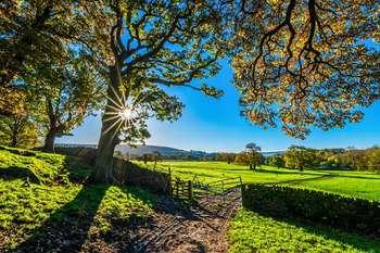 Aiuti agricoltura - Photo credit: TimHill su Pixabay