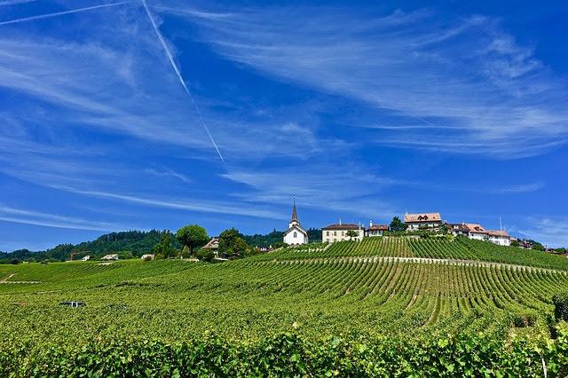 Agricoltura - Foto di Siggy Nowak da Pixabay