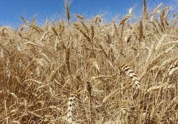 Agricoltura - Photo credit: Foto di Cara Shelton da Pixabay