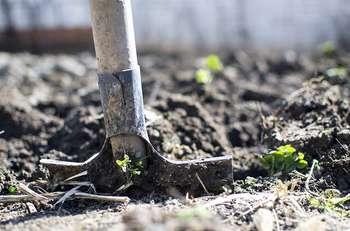 Agricoltura - Photo credit: Foto di Goumbik da Pixabay