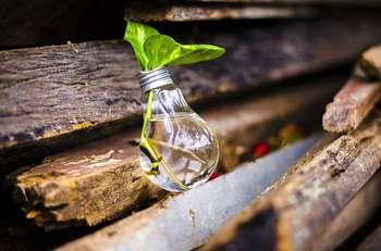 Green new deal - Foto di StockSnap da Pixabay