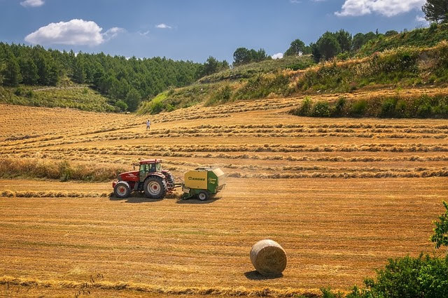 ISMEA: misure straordinarie per imprese agricole contro crisi coronavirus
