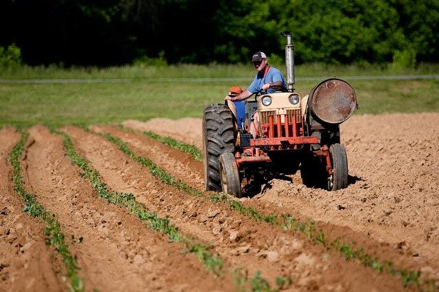 Agricoltura - Photo credit: John Lambeth da Pexels