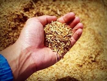 Agricoltura - Foto di icon0.com da Pexels