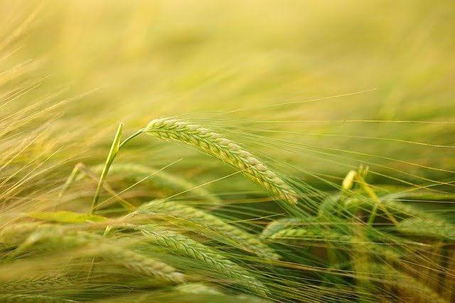 Agricoltura - Photo credit: Foto di Hans Braxmeier da Pixabay