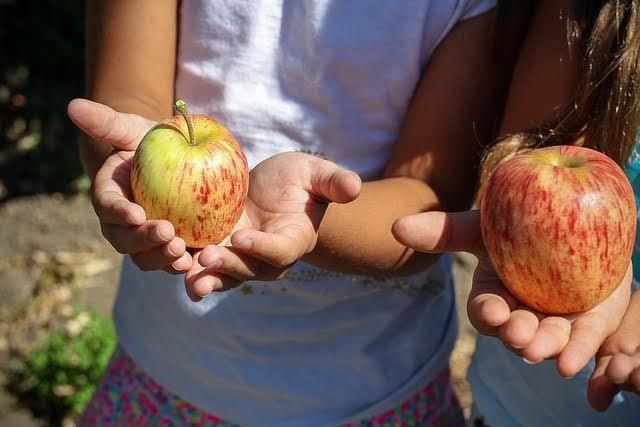 Frutta e verdura nelle scuole - Photo credit: Foto di Aline Ponce da Pixabay