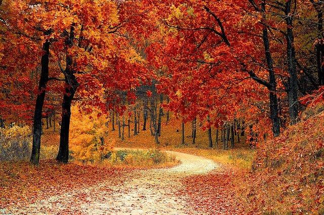 Foreste - Photo credit: Foto di Valiphotos da Pixabay