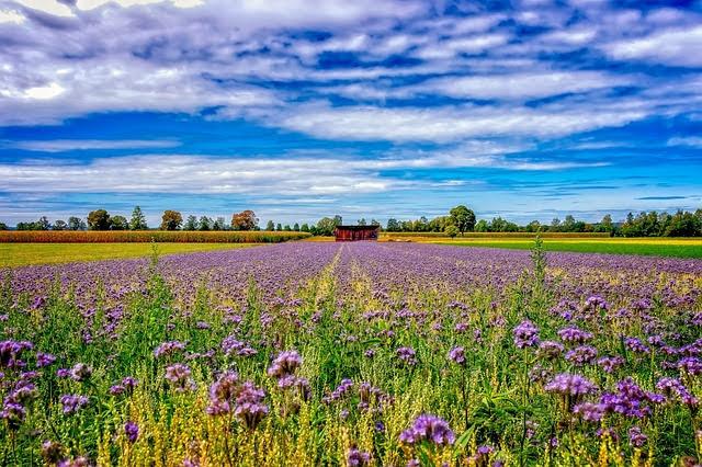 Aiuti di Stato agricoltura - Foto di Peter H da Pixabay