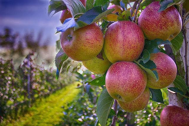 Agricoltura - Photo credit: Foto di Marco Roosink da Pixabay