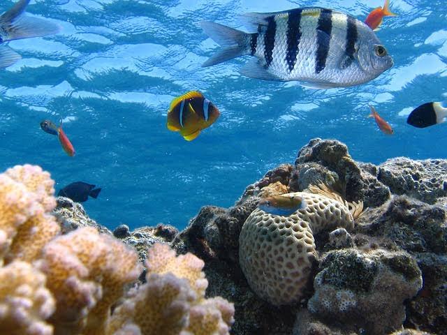 Ecosistemi marini - Photo credit: Foto di kimhiz da Pixabay
